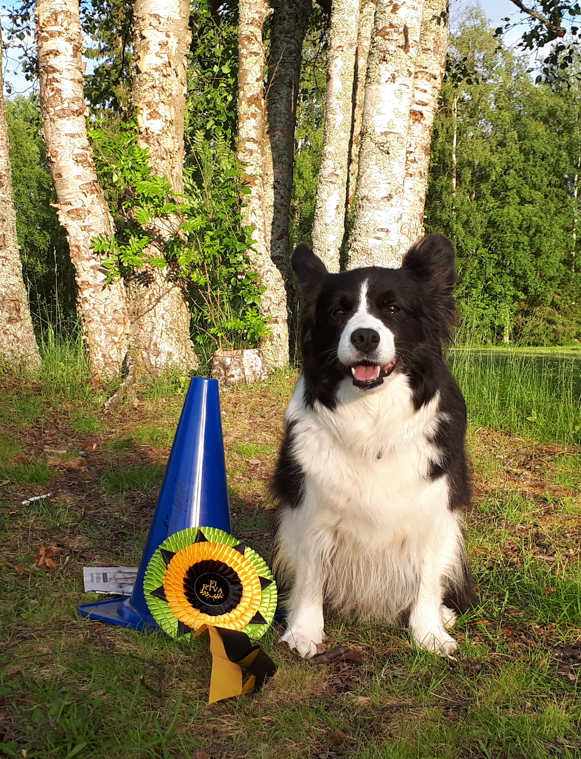 Rally-obedience Champion Super